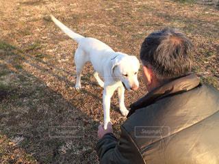 犬,河川敷,シニア男性