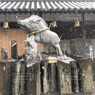 着いたら雪降ってきた。の写真・画像素材[1743212]
