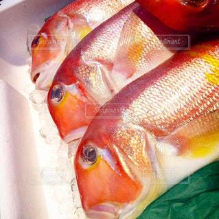 近くに魚のアップの写真・画像素材[1791634]