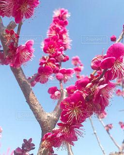 植物にピンクの花の写真・画像素材[1836842]