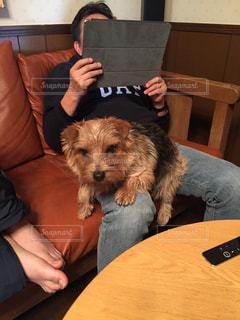 犬,動物,抱っこ,膝の上,指定席,特等席