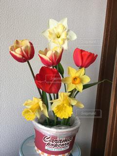 花の写真・画像素材[488375]