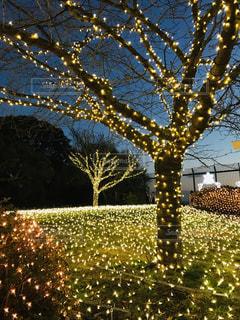 花,冬,屋外,樹木,明るい,草木