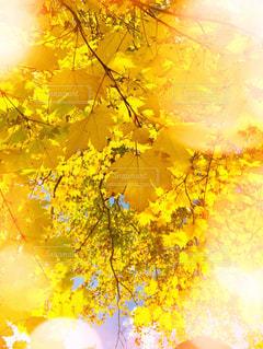 屋外,黄色,樹木,明るい