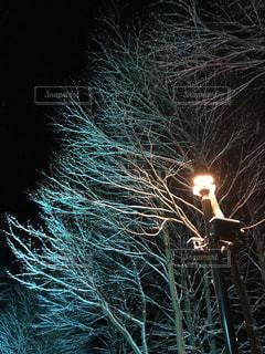 暗闇の中で立っている人の写真・画像素材[1734731]