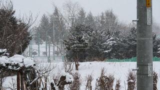 雪に覆われた建物の写真・画像素材[1735111]