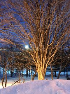地面の雪の木の写真・画像素材[1736884]