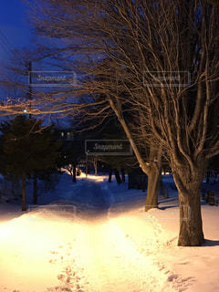 地面の雪の木の写真・画像素材[1736886]