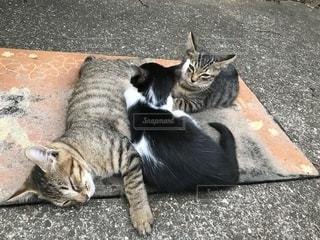 歩道に横たわる猫の写真・画像素材[2330960]
