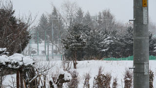 窓からの雪景色の写真・画像素材[1736548]