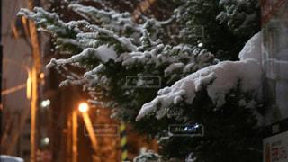近くに雪の覆われた通りの写真・画像素材[1739581]