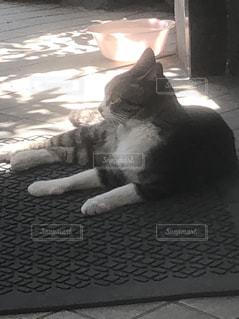 猫2の写真・画像素材[2293184]