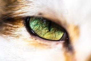 猫の写真・画像素材[2793949]