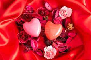 赤い花の写真・画像素材[2927775]