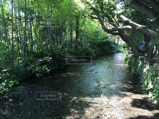 柿田川公園の写真・画像素材[1751899]
