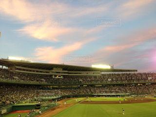 緑の芝生と大きなスタジアムの写真・画像素材[1753503]