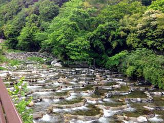 箱根の清流の写真・画像素材[1761927]