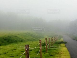 霧の中の写真・画像素材[1765145]