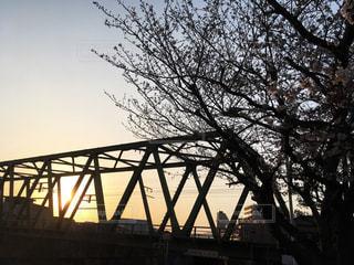 夕日と桜と鉄道橋の写真・画像素材[2216656]