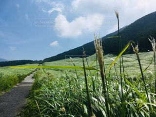 水域の隣の緑豊かな野原の写真・画像素材[2419323]