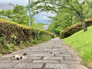 猫のいる風景の写真・画像素材[4514685]