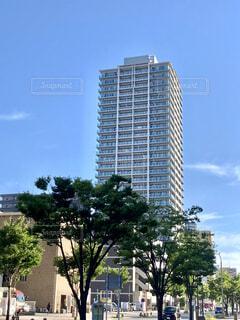 街路樹とタワーマンションの写真・画像素材[4592885]