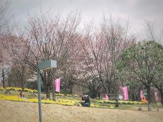 桜祭りの会場にての写真・画像素材[2041389]