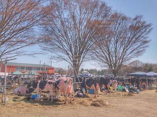 酪農祭りの写真・画像素材[2041397]