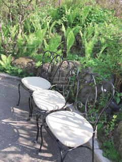 庭のクローズアップの写真・画像素材[2227460]