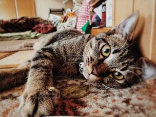 猫の写真・画像素材[2489445]