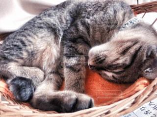 猫の写真・画像素材[2498250]