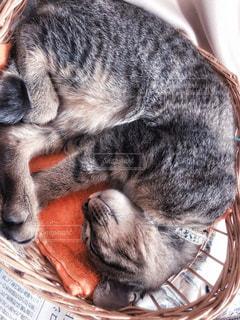 猫の写真・画像素材[2498251]