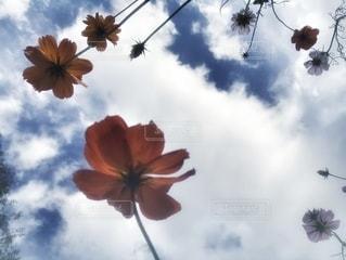 お花と空の写真・画像素材[2633672]
