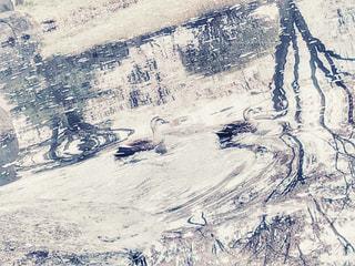 水鳥の写真・画像素材[3106893]