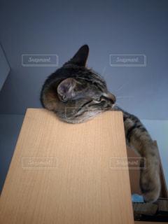 疲れている猫の写真・画像素材[3143787]
