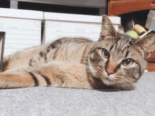 我が家の愛猫の写真・画像素材[3182360]