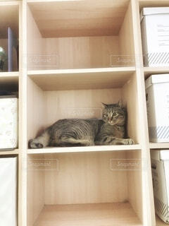 棚に座っている猫の写真・画像素材[4855915]