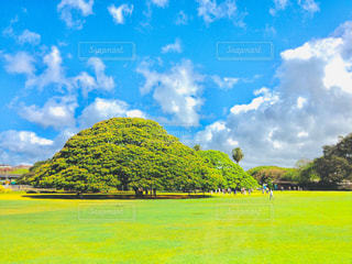 ハワイのこの木何の木の写真・画像素材[1780208]