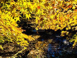 秋の写真・画像素材[1780911]