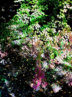 近くの緑豊かな緑の森の上にフラワー ガーデンの写真・画像素材[1782337]