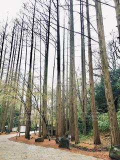背の高い木の写真・画像素材[1834159]