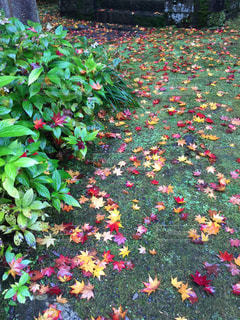 日本の秋の写真・画像素材[1739977]