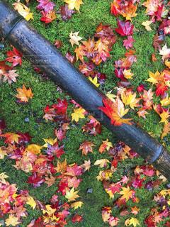 季節を楽しむ。日本の秋の写真・画像素材[1739979]