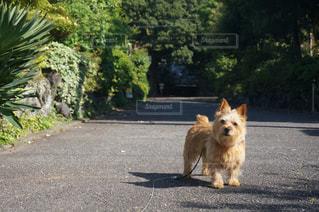 リゾート犬の写真・画像素材[1740757]