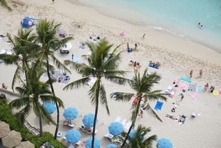 Palm treesの写真・画像素材[1743434]