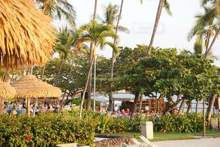 Beach resortの写真・画像素材[1743436]