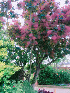 なんか可愛い木の写真・画像素材[2133865]
