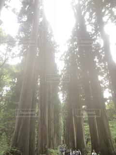 戸隠神社 神聖な参道の写真・画像素材[1862901]