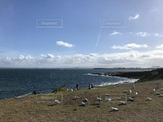 水の体の横にあるビーチ上空を飛ぶ鳥の群れの写真・画像素材[1742593]