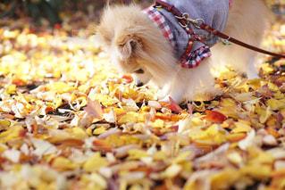これが秋の匂いだね。の写真・画像素材[2363897]